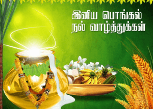 Thai Pongal Wishes Images