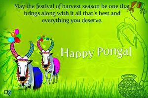 Thai Pongal Picture Message